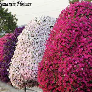 wholesale200 редкие семена деревьев петунии редкие семена для дома сад бонсай лепестки Петуниаплант бонсай