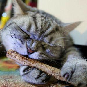 5 pçs / lote catnip natural cat limpeza dentes Pure cat pet molar creme dental vara silvervine actinidia frutas Matatabi brinquedos do gato