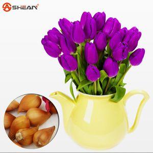Тюльпан луковицы, фиолетовые тюльпаны, разнообразие свежие клубнелуковицы посадил многочисленные 100% показатель успеха-5pcs