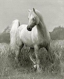 Çerçeveli manzara içinde güzel hayvan beyaz at, hakiki Handpainted Sanat yağlıboya Tuval Üzerine Çok boyutları Mevcuttur Ücretsiz Kargo HS070
