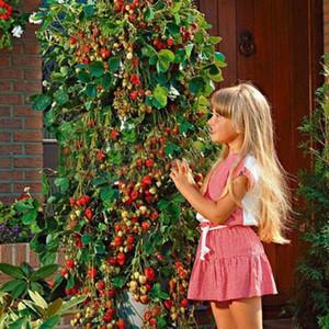 100 PCS Tree Climbing Strawberry Graines Cour Garden Avec Des Graines De Fruits Et Légumes En Pot Maison Jardin Plantiing