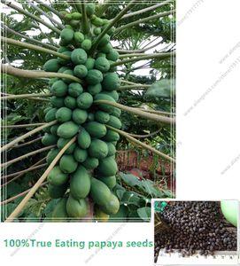 100%true papaya(Carica papaya) seeds. dwarf organic sweet papaya seeds in Bonsai,15pcs bag Rare fruit seeds edible Carica papaya