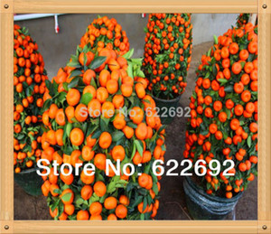 vente en gros! 50 Pcs / pack Graines De Fruits Comestibles En Pot Bonsai Escalade Graines D'aranger Plant Bonsaï