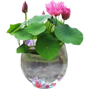 10 samen / pack Balkon hydroponischen bonsai nelumbo nucifera samen hydrophyte samen lotus blumensamen