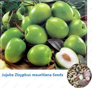 Giuggiola Zizyphus mauritiana Semi Indian Jujube Tree semi Bonsai RARE semi di frutta tropicale per la casa giardino 10 semi / bag