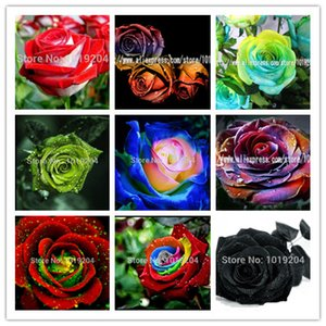 200 PCS Beautiful Flower Rainbow rose seeds Rose Seeds Bonsai plant roses