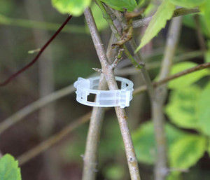 100 PCS / PACK Atacado Plástico Enxertia Grampos Dispositivo de Fixação para Tomates e Plantação de Cereja Plantador de Flores Ramo Tendril Tomate Haste Bloqueio
