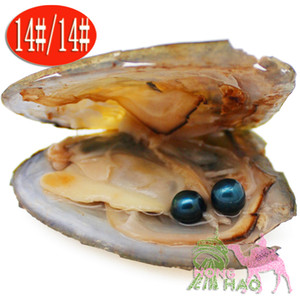 Artificial aquaculture natural freshwater pearl Akoya parenting beloved pearl oyster and twins pearl two different colors