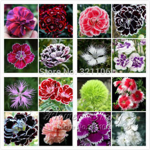 wholesalePromotion! 200 Dianthus Seeds , 16 kinds mixed packedbonsai plant garden
