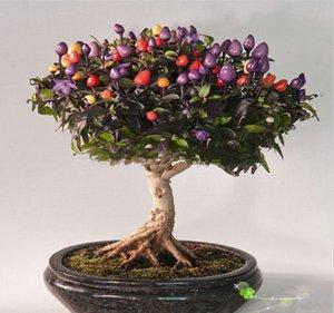 Graines de légumes en pot coloré coloré 100 piments graines graines comestibles ornementales bonsaï plante jardin bricolage livraison gratuite