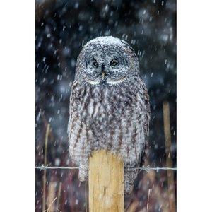Snowy Owl DIY Pintura Diamante Bordado 5D Ponto Cruz de Cristal Quadrado Unfinish Início Quarto Arte Da Parede Decoração Artesanato Presente