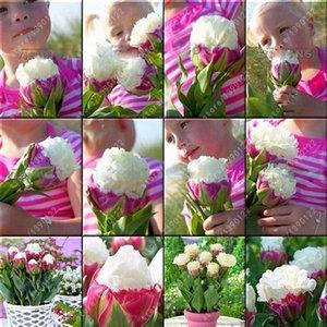 10 teile / beutel tulpe samen Seltene bonsai blumensamen eis wie schöne tulpen topf mehrjährige hausgärten tulip hosen