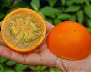 Quito Orange Naranjilla Lulo Solanum Quitoense Fruit Seeds, Professional Pack, 100 Seeds   Pack, Edible E3342