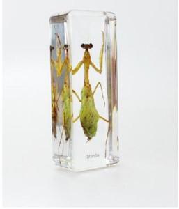 Mantis Biyoloji Öğretmenliği Aletleri Akrilik Reçine Böcek Paperweight Şeffaf Fare Blok Çocuk Bilim LearningEducation Numune Gömülü