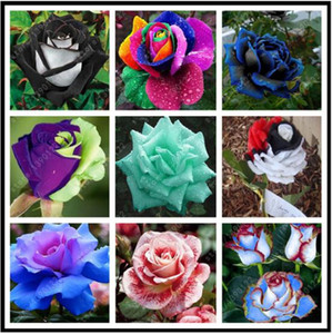 200 pcs bag Rare Mixed Colors rose seeds rainbow rose seeds bonsai flower seeds black rose rare balcony plant for home garden
