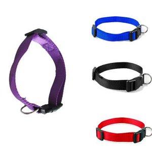 Vendita 1 Pc Collari per cani Pet Charme 4 colori 4 Taglie S-XL Nylon Solid Collar Gift