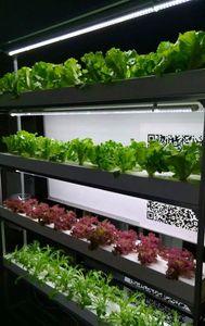 새로운 전체 스펙트럼 흰색 식물 공장 led 가벼운 1200mm T8 주도 성장 데이지 체인 튜브 빛
