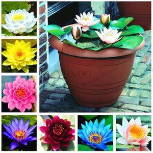 10 teile / beutel lotus blume lotus samen wasserpflanzen schüssel lotus seerose samen mehrjährige pflanze für hausgarten einfach zu wachsen