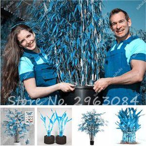 30 Pcs Vente Chaude Rare Ciel Bleu Chanceux Bambou Graines Bonsaï En Pot Balcon Radiation Absorption Planter Des Graines Pour DIY Maison Jardin