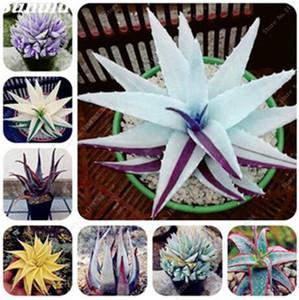 Rare Couleur Aloe Seeds 100 Pcs Plantes De Cactus Succulentes Comestibles Beauté Fruits Végétable Graines Herbes Plantes Mini Jardin Balcon Plantes