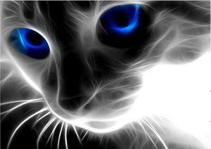 DIY 5D алмазная мозаика мультфильм кошек ручной работы Алмаз живопись вышивки крестом комплекты алмазов вышивки стразами искусства