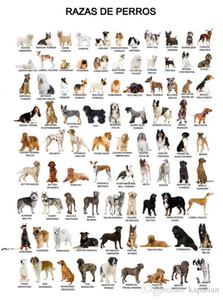 Animal Poster The Dog Poster Home Decor Wallpaper Art Posters Print Photopaper 16 24 36 47 inches