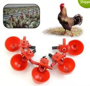 Otomatik Kuşlar Tavuk Içme Suyu Kaseler Bardaklar Kümes Hayvanları Besleme Araçları Ekipmanları Coop Fowl Tiryakisi