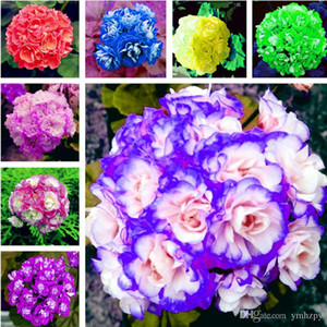 Hot 100 Pcs Bag Multiple Colour Geranium Seeds Perennial Climbing Flower Pelargonium Indoor Beauty Flower Plant For Garden