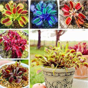 100 Pcs Dionaea Muscipula Plant Seeds Rrae Insectivorous Plant Terrace Garden Carnivorous Plant Flytrap So Interesting