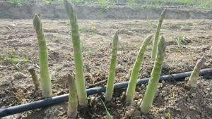 Высокое качество сад капельницы экономии воды капельного орошения трубы теплицы капельного орошения системы