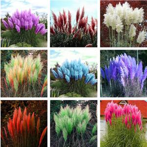 200 Adet Pampas Garss, Pampas Tohumları, Pampas Çim Bitki, Süs Bitkisi Çiçekler Cortaderia Selloana Çim Tohumları Ev Bahçe için