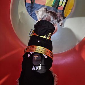 Haustier Hund Außen Kragen Leinen Haustier Hund Katze Leinen Geschirre Mode Kleine Teddy Schnauzer Verstellbaren Riemen Weste Kragen