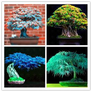 10 Adet -4 Çeşit Nadir Japon Akçaağaç Tohumları, Mükemmel Renk Mini Bonsai Ağacı Tohumları, Diy Ev Bahçe Için Suit