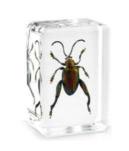 Tiger Beetle Probe Acrylharz eingebettete Insekten LernenBildungsspielzeugGifts Transparent Mouse Paperweight Kids Biology Science Kits