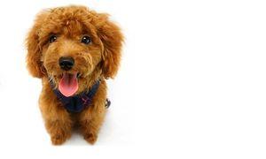 Cane Masticare Corda Osso Forniture per animali domestici Cucciolo Cotone Durevole Intrecciato Attrezzo divertente Doppio nodo Giocattolo Animali domestici Mastica Nodo Gioca con il cane