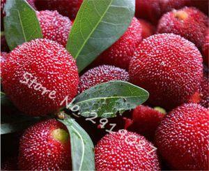 10 Pcs / sac Graines de Myrica rubra Doux Noir et Rouge Rare Graines d'arbres fruitiers tropicaux exotiques comestibles