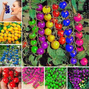 50 Unids Colorido Semillas de Tomate Cereza Balcón Arco Iris Dulce Frutas y Verduras Semillas En Maceta Bonsai En Maceta Semillas de Tomate Envío Gratis