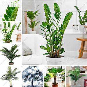 10 개 분재 종자 다년생 꽃 씨앗 실내 야외 식물 고품질 화분 DIY 가정 정원 가구