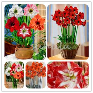 100 PC / 가방 멀티 컬러 아마 릴리스 씨앗 전구 아니 분재 꽃 Hippeastrum 씨앗 홈 정원 백합 꽃 냄비 식물