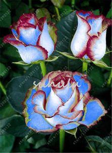 200 unids / bolsa semillas color de rosa Double Delight Hybrid Tea Rose bonsai semillas de flores hermosas perennes pétalos de rosa para la planta de jardín en casa