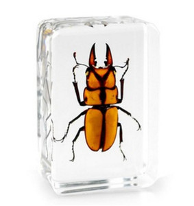 Käfer-Proben Acrylharz eingebettetes echtes InsektenlernenBildungsspielzeugGifts Transparent Mouse Paperweight Kids Biological Science Kits
