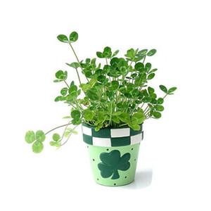 Semi di trifoglio, piccoli fiori al coperto quattro semi di trifoglio di foglie, piante di bonsai trifoglio fortunato 100 particelle / sacchetto