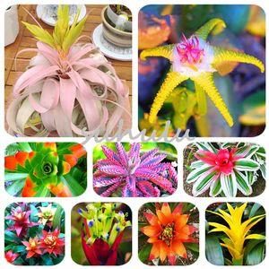 50 Pcs Sementes de Bromeliácea Vegetais E Frutas Jardim Suculenta Plantas Mini Cactus Pots Barato Rainbow Crianças Bonsai Sementes de Flores
