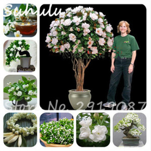 10 Jasmine Seeds Bonsai Beautiful Flower Seeds Bonsai Potted Plant Fast Grow White Pink Colors Bonsai Potted Plants Home Garden