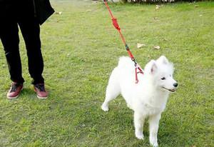 Cão leash chest arnês pet collar cão corda cadeia cabelo dourado ursinho pet fornecimentos