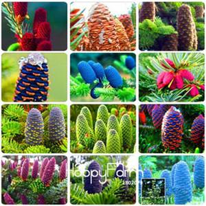 50 Pcs Abies Seeds, Korean Fir,Nordmann Fir (Christmas Tree, Conifer) Seeds Tree, House Garden Bonsai Plants and Flowers Seed