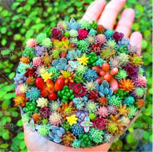 Semillas De Flores 200 Pz Rara Semi di Lithops Pseudotruncatella Succulente Semi di Cactus Pietra Grezza Gambi Tetragonia Fiori in vaso Carnoso