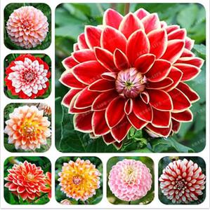 20 pz / borsa rari colori misti semi di dalia bella perenne fiori cinese peonia bonsai fiore per diy casa giardino piantare