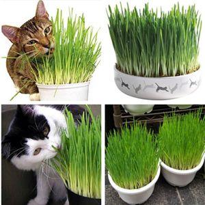 Cat Grass Seeds Triticum Aestivum Small Catnip Seeds Kitten Wheat Grass Bonsai Cat Spit Hair Balls Health Care Cat 100 PCS bag