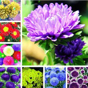 Grande Vendita 100 Pz / borsa Aster Semi aster fiore bonsai semi di fiori arcobaleno semi di crisantemo fiori Perenni casa giardino pianta